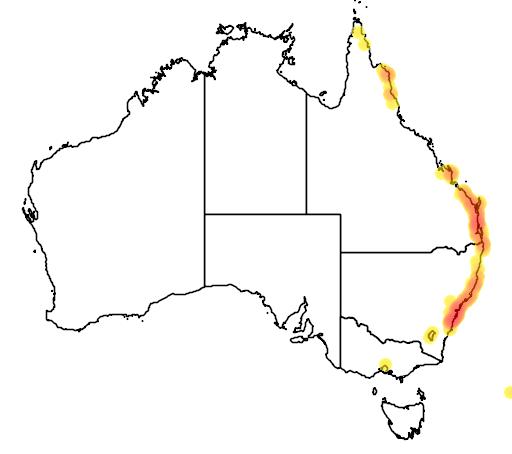 distribution map showing range of Banksia robur in Australia