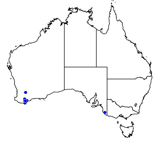 distribution map showing range of Banksia solandri in Australia