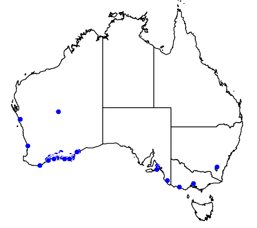 distribution map showing range of Banksia speciosa in Australia