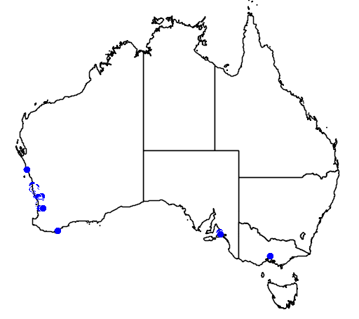 distribution map showing range of Banksia telmatiaea in Australia