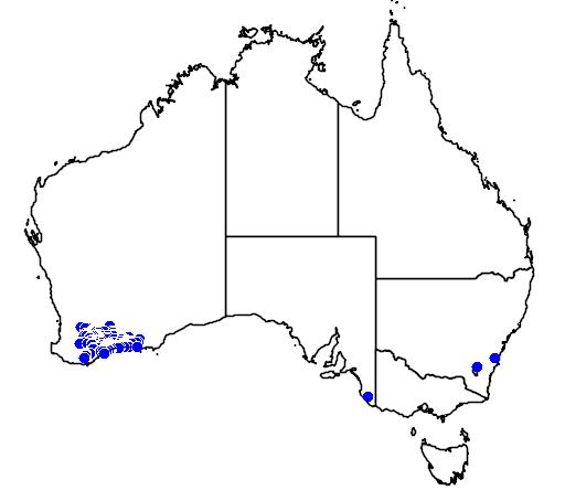 distribution map showing range of Banksia violacea in Australia
