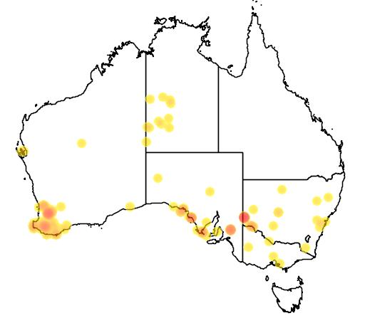 distribution map showing range of Bettongia penicillata in Australia