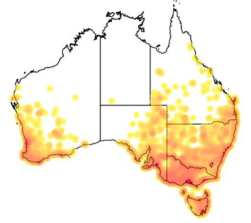 distribution map showing range of Biziura lobata in Australia