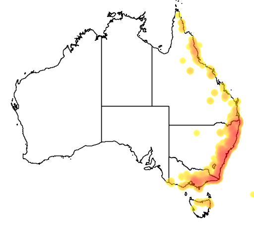 distribution map showing range of Blechnum cartilagineum in Australia
