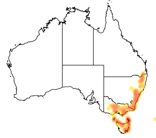 distribution map showing range of Boronia anemonifolia in Australia