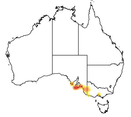 distribution map showing range of Boronia filifolia in Australia