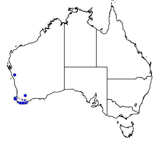 distribution map showing range of Boronia gracilipes in Australia