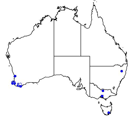 distribution map showing range of Boronia heterophylla in Australia