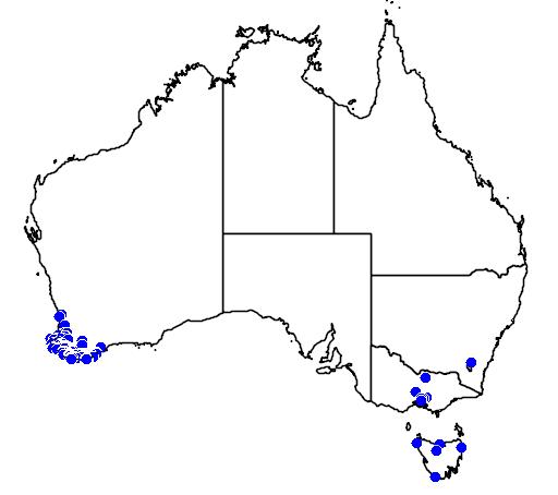 distribution map showing range of Boronia megastigma in Australia