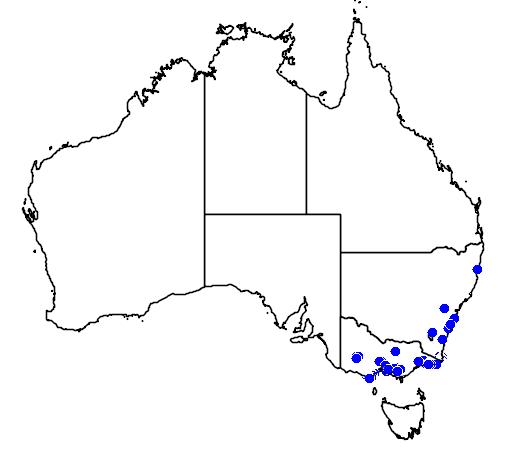 distribution map showing range of Boronia muelleri in Australia