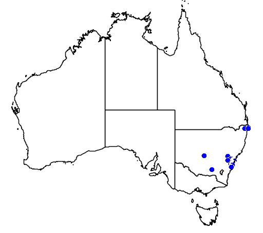 distribution map showing range of Boronia serrulata in Australia