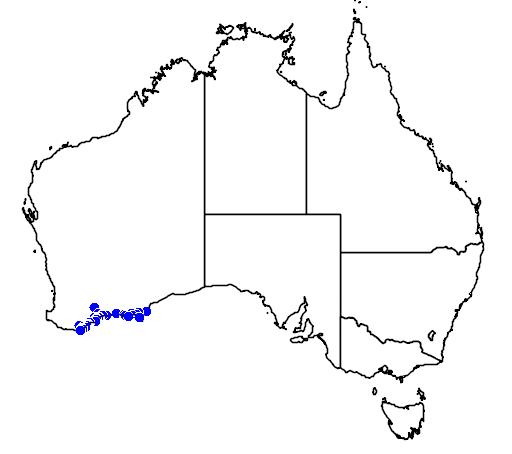 distribution map showing range of Boronia tetrandra in Australia