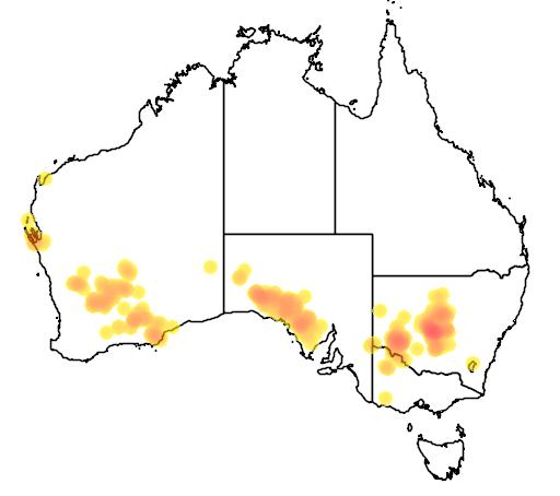 distribution map showing range of Bossiaea walkeri in Australia