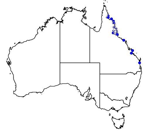 distribution map showing range of Bowenia spectabilis in Australia