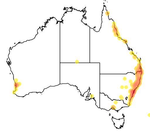 distribution map showing range of Brachychiton acerifolius in Australia