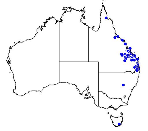 distribution map showing range of Brachychiton bidwillii in Australia