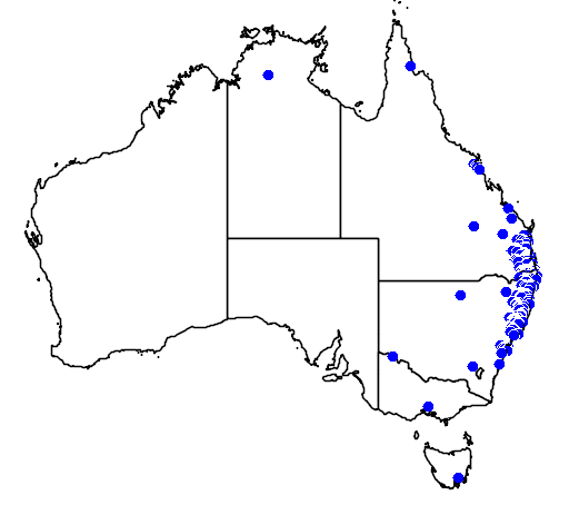 distribution map showing range of Brachychiton discolor in Australia