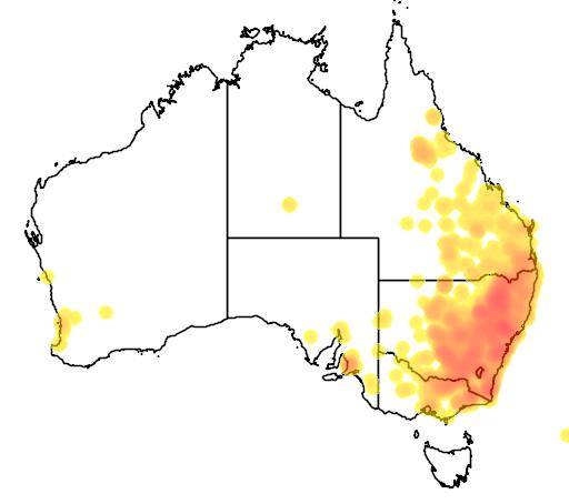 distribution map showing range of Brachychiton populneus in Australia