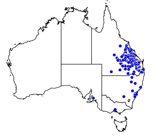 distribution map showing range of Brachychiton rupestris in Australia