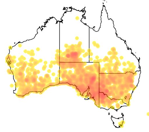 distribution map showing range of Brachyscome ciliaris in Australia