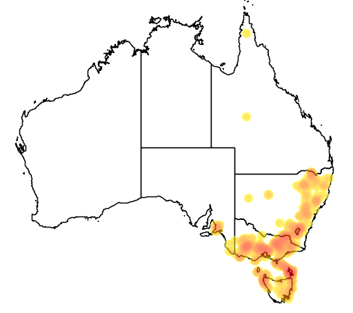distribution map showing range of Brachyscome diversifolia in Australia