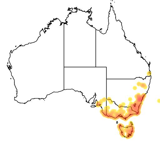 distribution map showing range of Brachyscome graminea in Australia