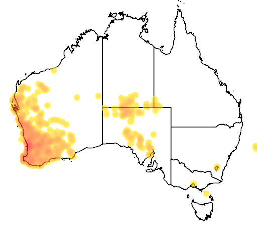 distribution map showing range of Brachyscome iberidifolia in Australia