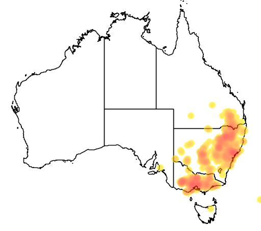 distribution map showing range of Brachyscome multifida in Australia