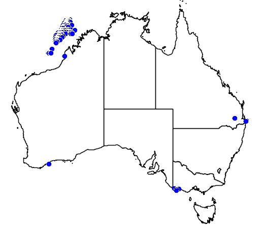 distribution map showing range of Bulweria bulwerii in Australia