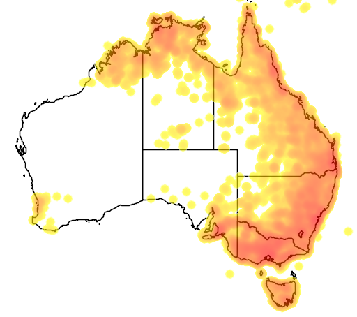 distribution map showing range of Cacatua galerita in Australia