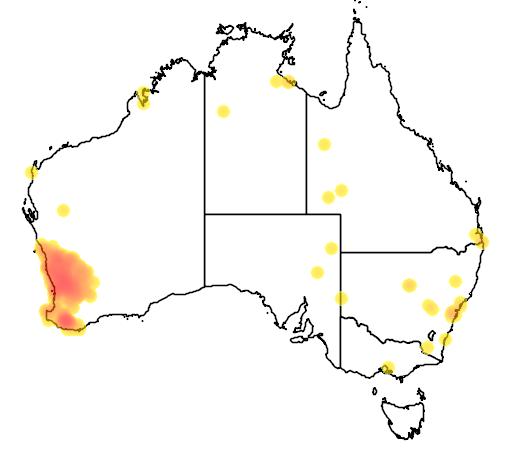 distribution map showing range of Cacatua pastinator in Australia