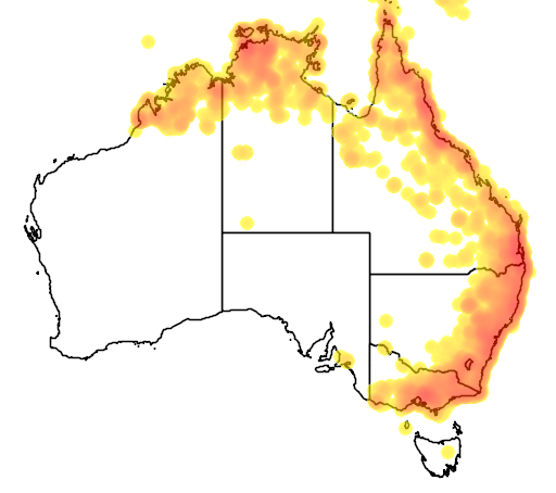 distribution map showing range of Cacomantis variolosus in Australia