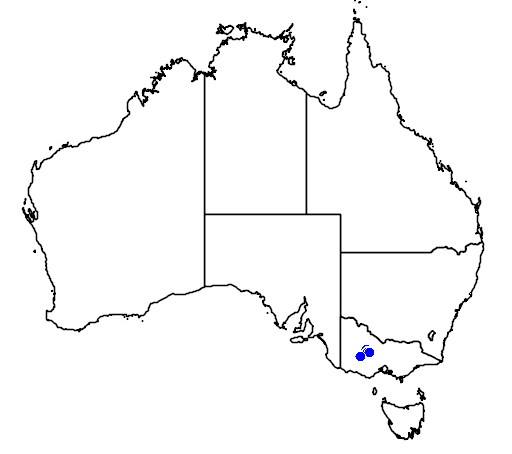 distribution map showing range of Caladenia ampla in Australia