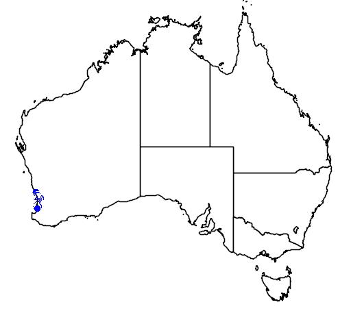 distribution map showing range of Caladenia arenicola in Australia
