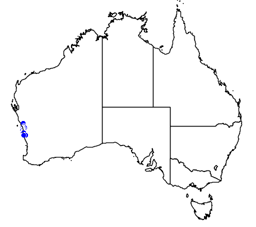 distribution map showing range of Caladenia crebra in Australia