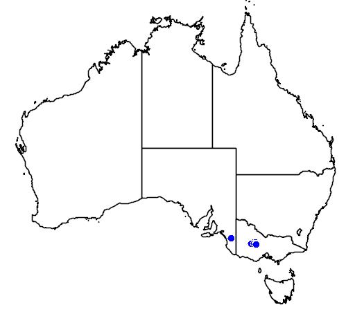 distribution map showing range of Caladenia cruciformis in Australia