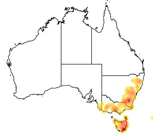 distribution map showing range of Caladenia gracilis in Australia
