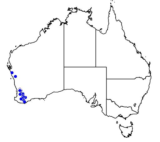 distribution map showing range of Caladenia integra in Australia
