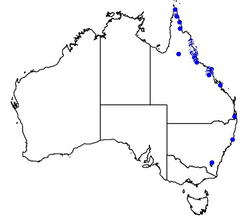 distribution map showing range of Calamus australis in Australia