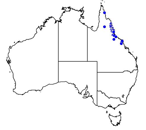 distribution map showing range of Calamus moti in Australia
