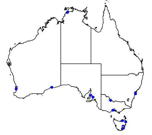 distribution map showing range of Calidris bairdii in Australia