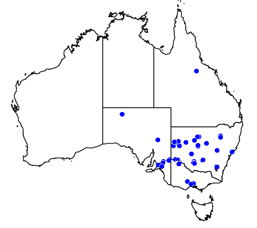 distribution map showing range of Callistemon brachyandrus in Australia