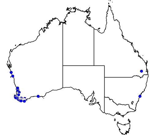 distribution map showing range of Callistemon glaucus in Australia