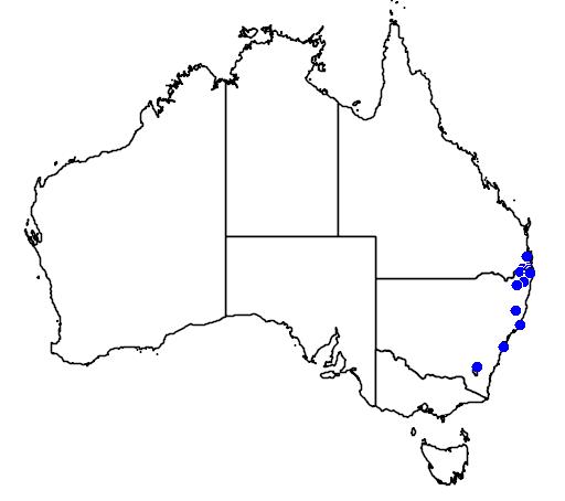 distribution map showing range of Callistemon montanus in Australia