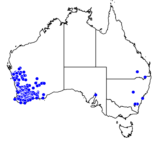 distribution map showing range of Callistemon phoeniceus in Australia