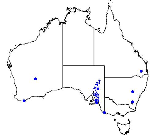 distribution map showing range of Callistemon teretifolius in Australia