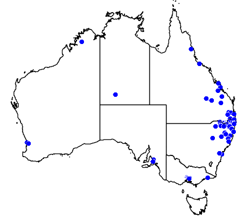 distribution map showing range of Callistemon viminalis in Australia