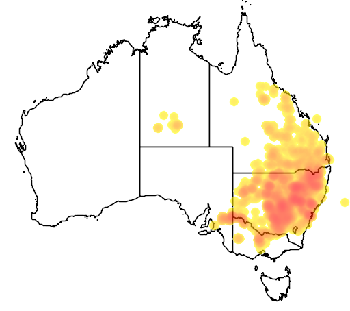 distribution map showing range of Calotis cuneifolia in Australia
