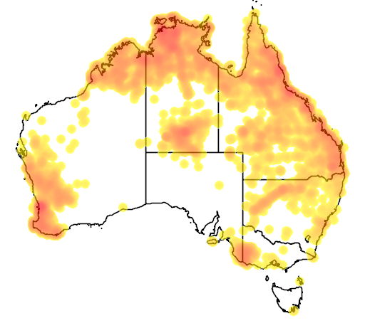distribution map showing range of Calyptorhynchus banksii in Australia