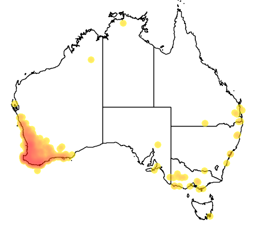 distribution map showing range of Calyptorhynchus baudinii in Australia